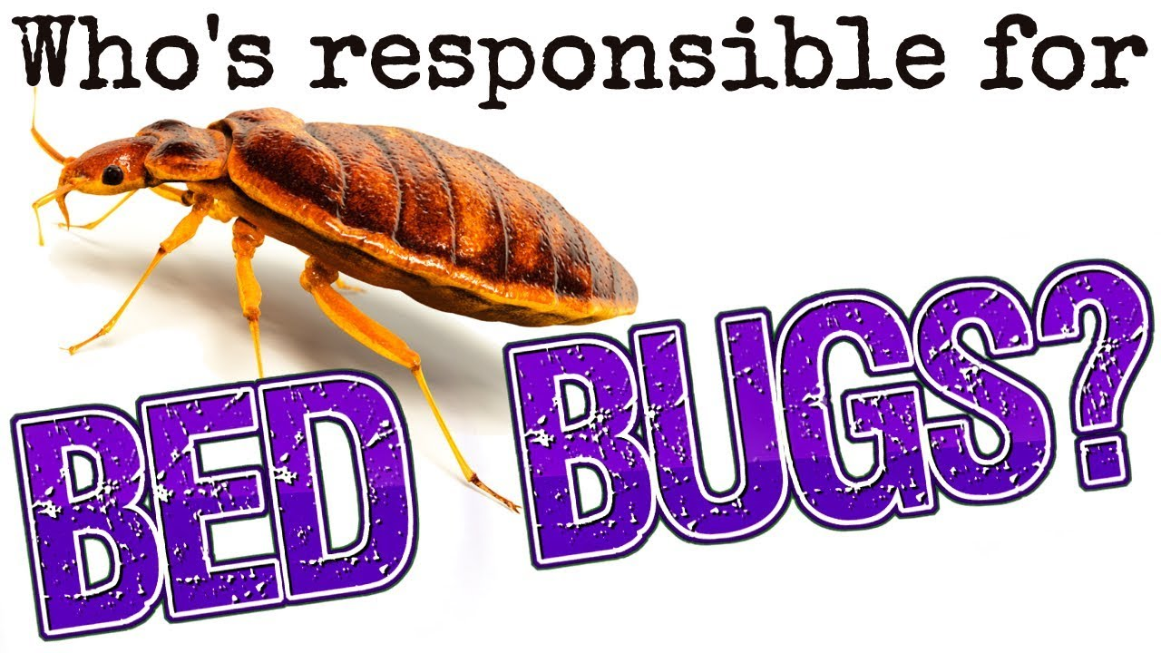 Exceptional Whou0027s Responsible For Bed Bugs   Landlord Tips