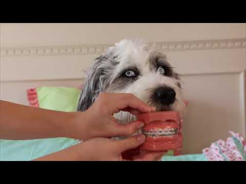 THE MIDDLE - Zedd, Maren Morris, Grey PARODY | New Braces TEEN SPOOF