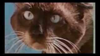 Побег кота Барсика