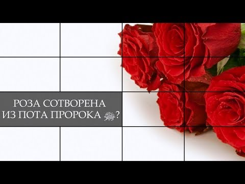 Роза сотворена из пота Пророка ﷺ?