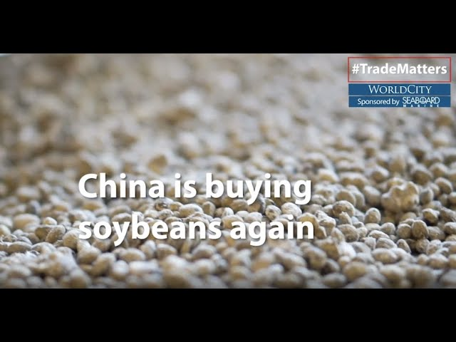 Trade War Update: China is Buying Soybeans Again