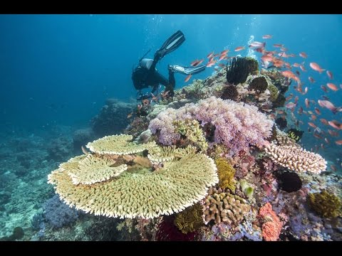 This Earth Day May Be Our Last With The Great Barrier Reef