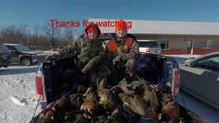 Late Season SD Pheasant Hunting 2017