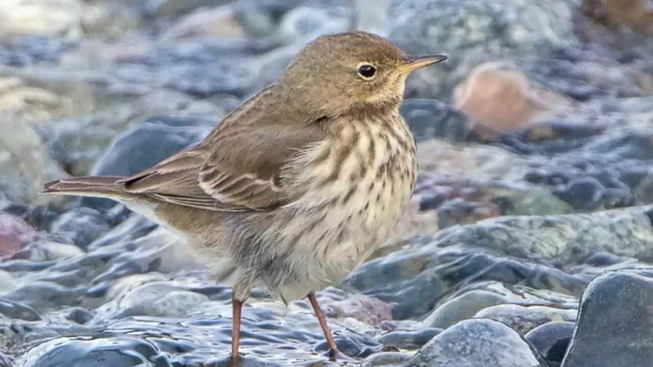 water birds identification
