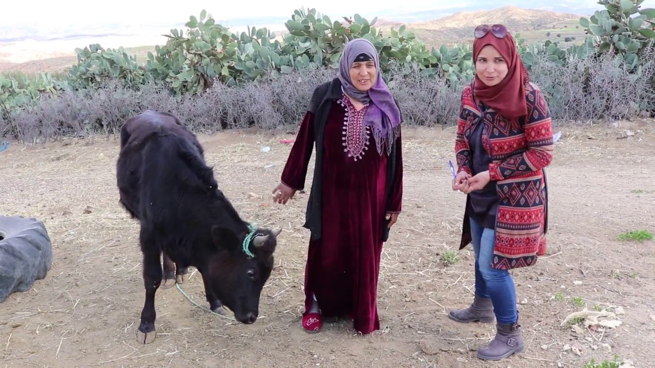 'Cactus choppers' reduce work load for rural women in Tunisia