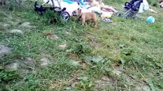Собака на речке нюхает человека