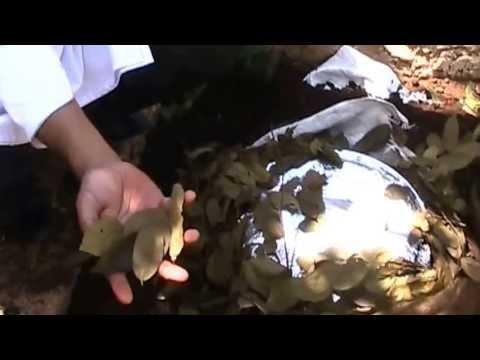 Recado Negro cocinado en Pib
