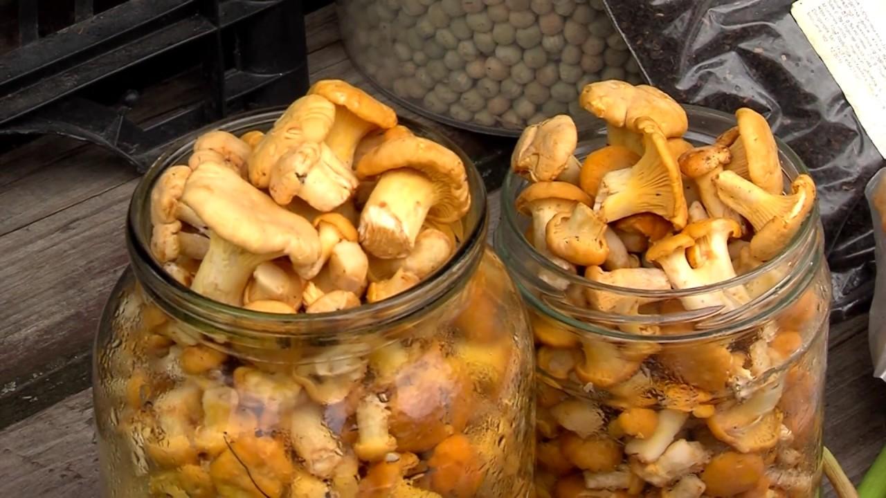 В продаже появились первые грибы и лесные ягоды - YouTube