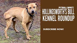 Brahma Hollingsworth's Bull X Titan Kennels Red Witch - Kennel Roundup