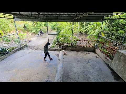 Bị Hai Kẻ Lạ Mặt Đột Nhập Vào Nhà PHÁ Hoại Bắt Hết Đàn Chó