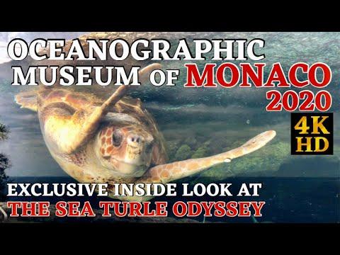 THE OCEANOGRAPHIC MUSEUM OF MONACO 2020 || CALM RELAXING MUSIC || 4KHD