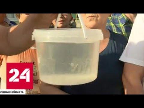 К президенту за водой: Путин лично подал заявку на водопровод для жителей села - Россия 24