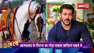 इस घोड़े पर Salman का आया दिल, फिर भी नहीं खरीद पाए Salman, देखिये पूरी खबर
