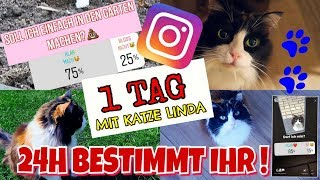 1 TAG bestimmt INSTAGRAM Katze Linda's Leben Haustier Routine 😻 Mavie