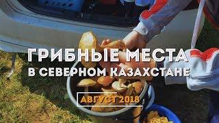 Грибные места Петропавловска 2018! Вот столько мы собрали