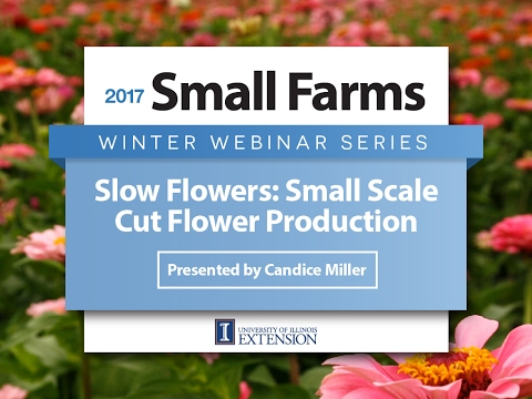 Slow Flowers: Small-Scale Cut Flower Production - Candice Hart - University of Illinois Extension