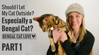 Should I Let My Cat Outside? Especially a Bengal Cat? PART 1