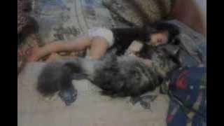 Наш котик (Мейн Кун 9 месяцев) и дочура (3 года)