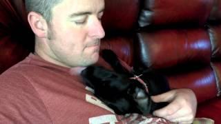Dog Snot