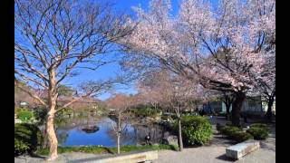 Landscape in Kyoto, April  ♪ Our Shangri-La/Mark Knopfler-Emmylou Harris