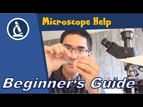 🔬 Observing The First Microscope Slide  | Amateur Microscopy