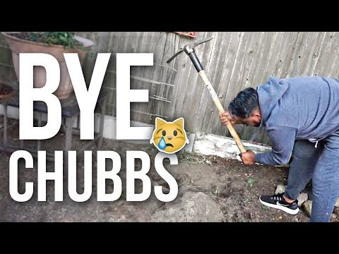 RIP Chubbs ❤️ Burying Our Dead Cat | Naptural85 Vlog