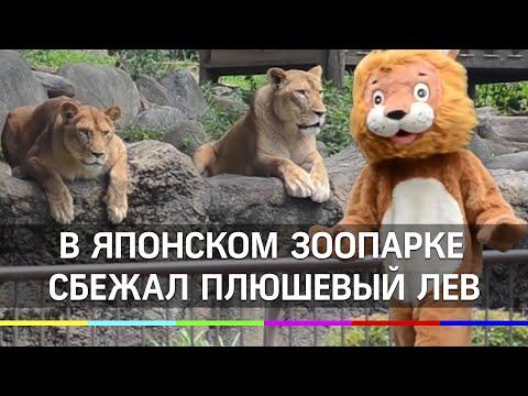 Плюшевого льва ловили в японском зоопарке. Смеялись все, даже звери