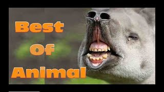 Funny Videos - Cute Cat , Cute Dog and more Cute Animals Compilation