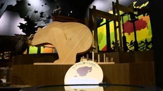 北海道博物館の自然展示のどんぐりと生き物のつながり。ヒグマにたべら...