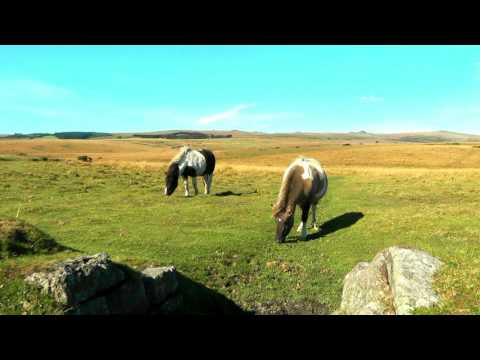 ENGLAND Dartmoor National Park, Devon (hd-video)