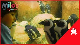 Zoo Animals Videos for Toddlers - Oki Ducky Learns Construction Vehicles - Milos Playground Season 1