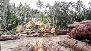 Logging  Solomon  Island. Mr Soon..