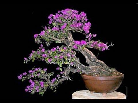 Flowering Bonsai Trees Youtube
