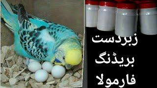 BREEDING FORMULA FOR ALL BIRDS | MUST WATCH