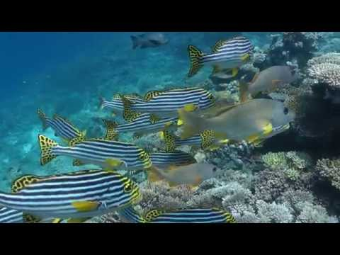 Embudu 2012 Haie am Strand HD 1080p scuba diving