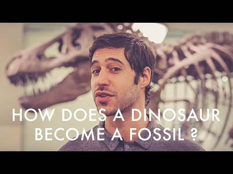 How Does a Dinosaur Become a Fossil?