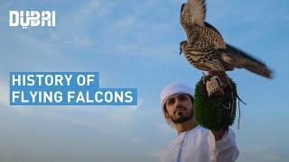 Generations of Flying Falcons in Dubai's Desert