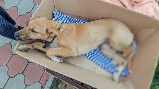 Спасаем щенка сбила машина Перелом задних лап  Что нужно делать и как помочь ?