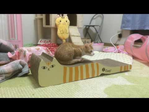 子猫ららちゃん指定席