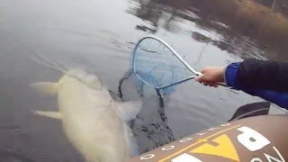 Huge Wisconsin River Buffalo Carp In a Tiny Boat