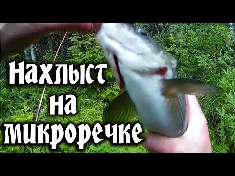 видео: Нахлыст хариус.  Рыбалка в Карелии. Grayling fly fishing