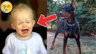 El perro mordió del pañal a la bebé y la lanzó por el jardín, entonces la madre ve su mortal error.