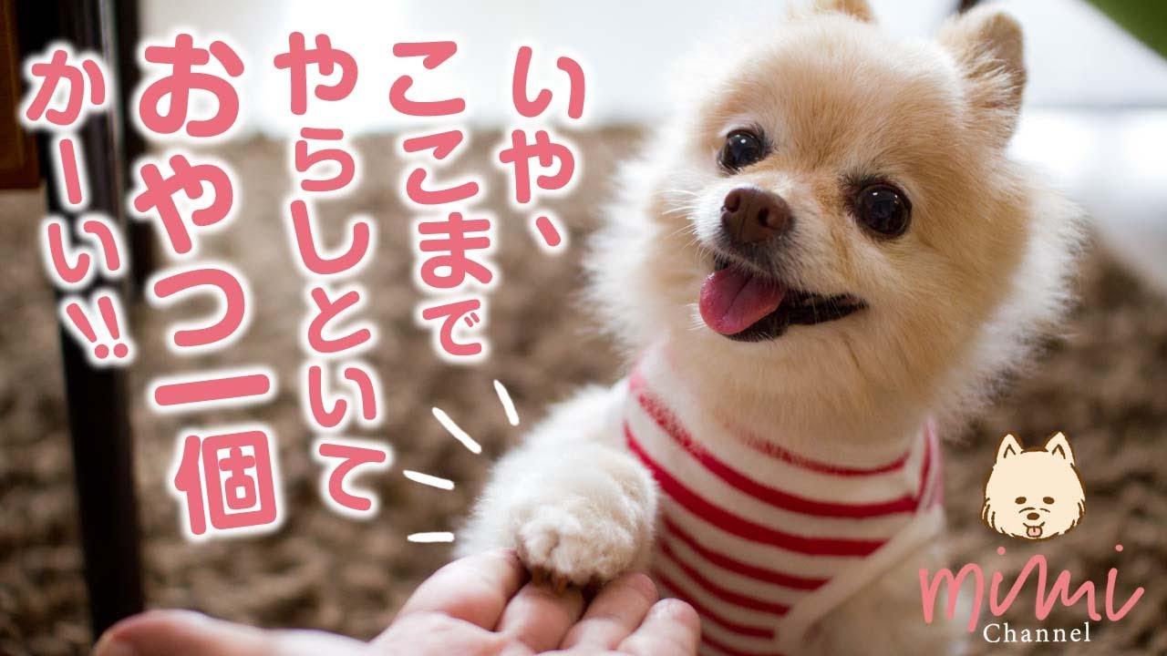 ミミチャンネル、新着動画です!