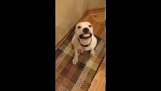 Say cheese. Smiling dog.