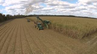 2014 Sugar Cane Harvest Houma Louisiana