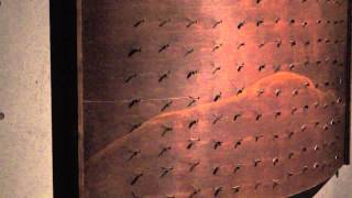 날벌레가 알려준 명상 전문가의 길