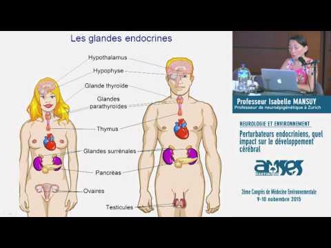 Perturbateurs endocriniens : Quel impact  sur le développement cérébral ?