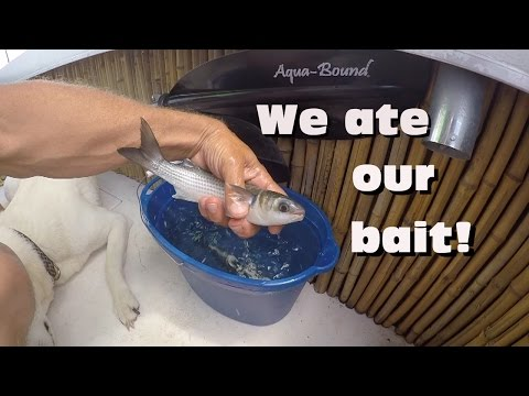 Quick Boat Update Part 24; Bait and Cook with Friends