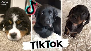 Funny DOGS of TikTok ~ Cute Puppers & Doggos ~ TIK TOK ~ Try Not to Laugh