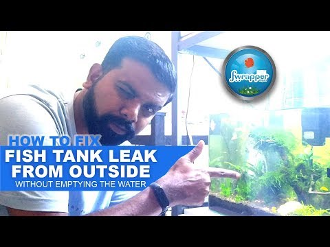 How To Fix Fish Tank Leak From Outside || My First Aquarium